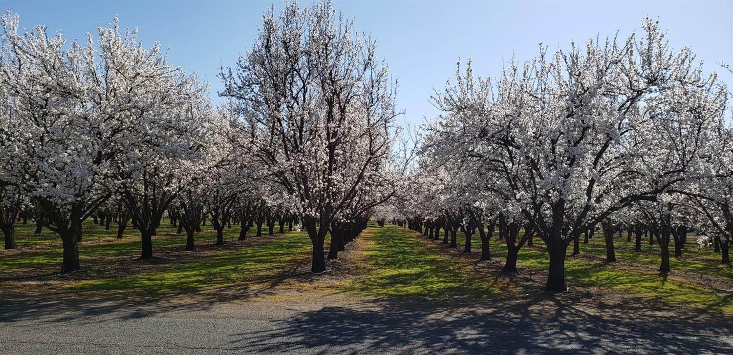 Agricultural Land for Active at Oak Way Chico, California 95973 United States