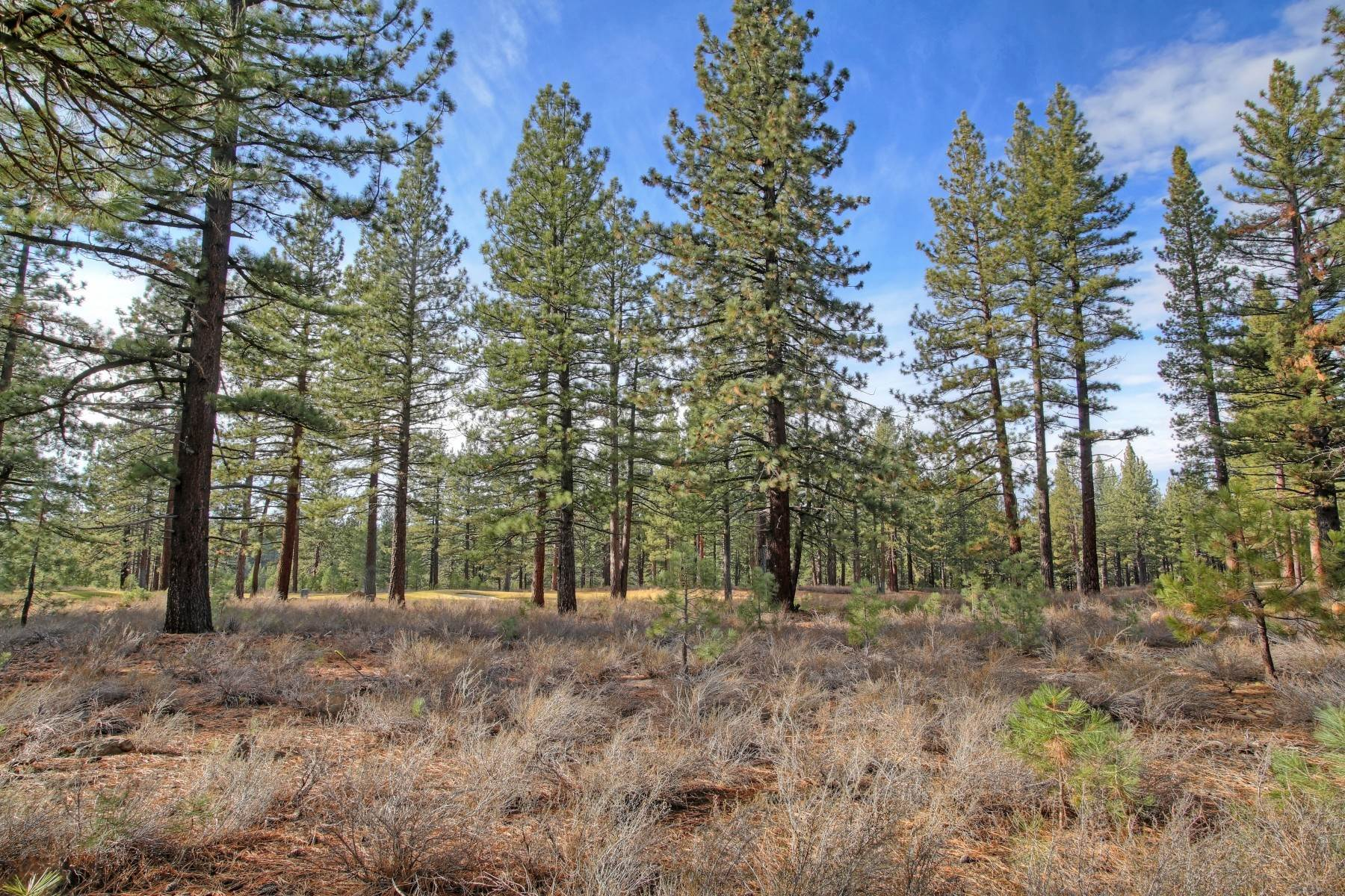 5. Land for Active at 12666 Caleb Drive, Truckee California 96161 12666 Caleb Drive Truckee, California 96161 United States