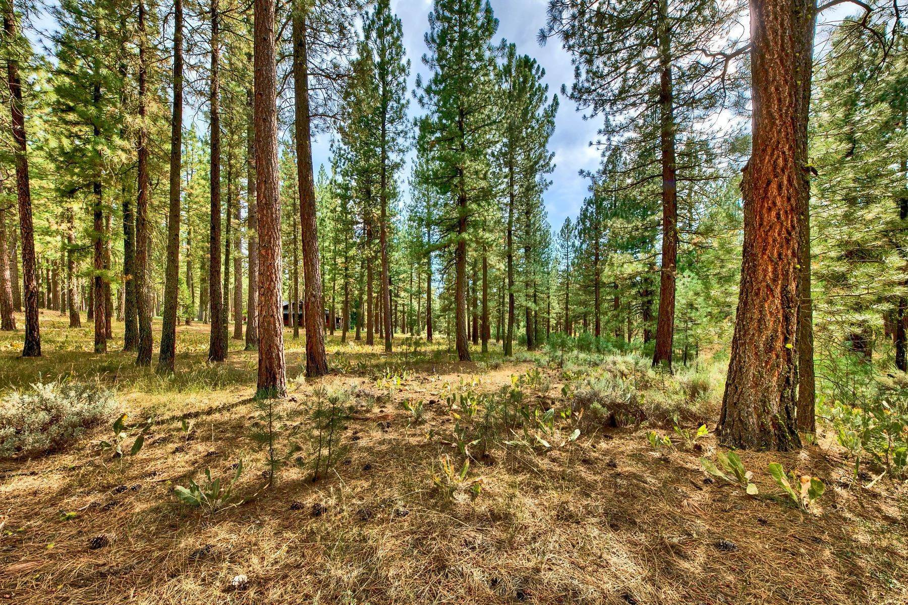 Terreno por un Venta en 5 Acres in Plumas County 4988 Grizzly Road Portola, California 96122 Estados Unidos