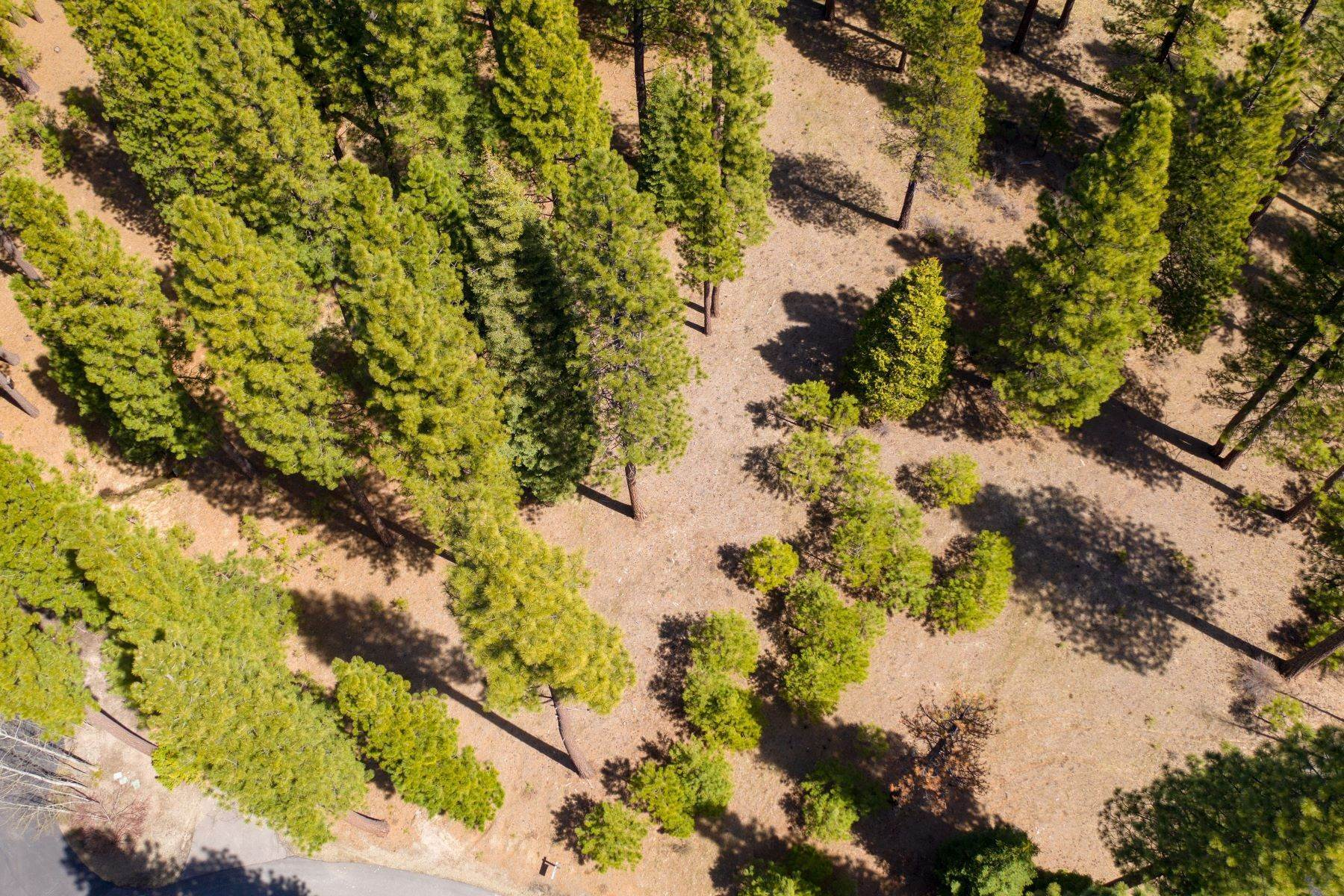 12. Land for Active at 148 Black Bear Trail, Clio, CA 96106 148 Black Bear Trail Clio, California 96106 United States