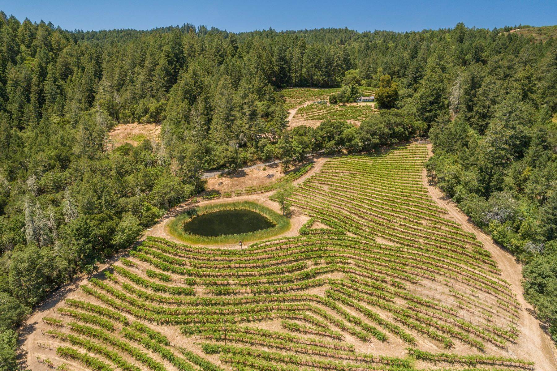 Terreno por un Venta en St. Helena Vineyard View 000 Spring Mountain Rd - 022-260-003 St. Helena, California 94574 Estados Unidos